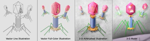 bacteriophage IllustrationStyles resized 600
