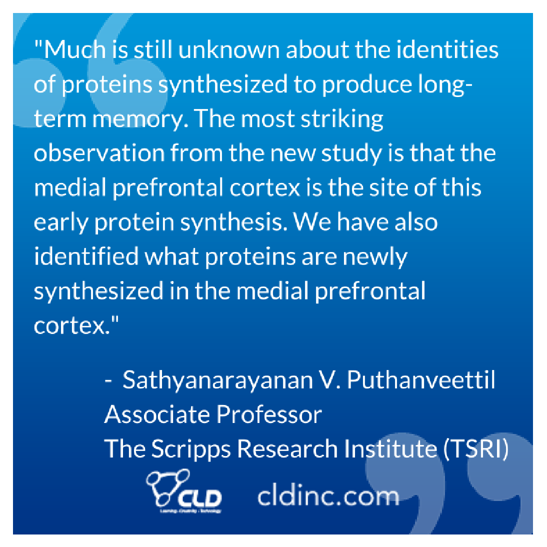 """Much is still unknown about the identities of proteins synthesized to produce long-term memory. The most striking observation from the new study is that the medial prefrontal cortex is the site of this early protein synthesis. We have also identified what proteins are newly synthesized in the medial prefrontal cortex."""" - The Scripps Research Institute (TSRI) Associate Professor Sathyanarayanan V. Puthanveettil"""